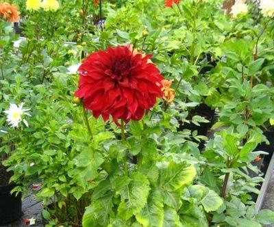 Blumenhaus Gloeden - Impressionen